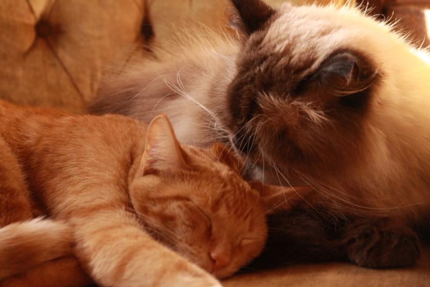 cats 004